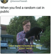 Fucking, Funny, and Nice: @AwwweYeeeah  When you find a random cat in  public  HAT S ONE FUCKING NICE KITTY  RIGHT THERE made by Bubblesisms