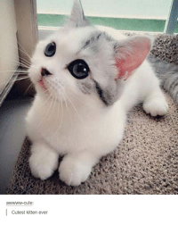 kitten: awwww-cute:  Cutest kitten ever