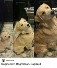 marxism-leninism-memeism:  awwww-cute:  Favourite evolution??? (Source: http://ift.tt/2CKV224)  a bot that reposts content from reddit reposted a screencap of itself from reddit : awwww-cute  Dogmander, Dogmeleon, Dogiza  rd marxism-leninism-memeism:  awwww-cute:  Favourite evolution??? (Source: http://ift.tt/2CKV224)  a bot that reposts content from reddit reposted a screencap of itself from reddit
