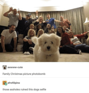 Christmas, Cute, and Dogs: awwww-cute  Family Christmas picture photobomb  afrofilipino  those assholes ruined this dogs selfie Why are people so rude?