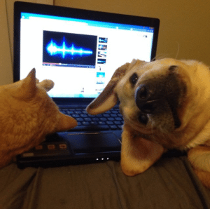 Cute, Tumblr, and Work: awwww-cute:  I can never get any work done