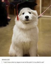 "Welcome to Random Wednesday! Congrats, pupper! randomwednesday tumblr tumblrtextpost puppy pupper dog dogs puppies cute adorable degree funnytumblr funnytumblrtextposts: awwww-cute:  ""I don't know what my degree is and at this point l'm too afraid to ask"" Welcome to Random Wednesday! Congrats, pupper! randomwednesday tumblr tumblrtextpost puppy pupper dog dogs puppies cute adorable degree funnytumblr funnytumblrtextposts"