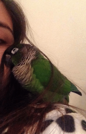 awwww-cute:  I got this bird 7 years ago untamed, today was the first day he ever cuddled with me: awwww-cute:  I got this bird 7 years ago untamed, today was the first day he ever cuddled with me
