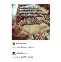 ive always wanted cat: aWWWW-cute  Lazy record store employee  wolftothemoon  nonsense give him a raise ive always wanted cat