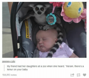 """Cute, Omg, and Tumblr: awwww-cute  My friend had her daughters at a zoo when she heard, """"Ma'am, there's a  lemur on your baby  164,093 notes At the zooomg-humor.tumblr.com"""