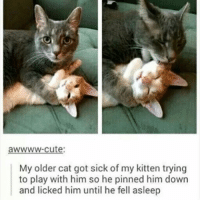 "Ass, Chris Pratt, and Cute: awwww-cute:  My older cat got sick of my kitten trying  to play with him so he pinned him down  and licked him until he fell asleep *TLC-themed open credits for my life begins to play* Hey, I'm Alden! I lost 30 pounds!...like 3 years ago. Now I've gained it all back and then some. I was like 185 pounds and now I'm 230. ""Oh Alden, don't worry, a lot of it is probably because you've gotten taller or because you've gained muscle. NUH-UHTTER BUTTER. I've barely grown over an inch taller since my arguable glory days!! That's like the length of a grasshopper! AND WE ALL KNOW THOSE SPRY MOTHER FUCKERS DON'T WEIGH 45 POUNDS. AND WHERE DO YOU THINK I COULD'VE POSSIBLY FOUND EXTRA MUSCLE MASS BY NOT EXERCISING, DAAAAD?? GENETICS?!? I'D LAUGH IF MY NECKS WEREN'T CHOKING ME. I've been acting like my constant weight gain lately is fine because it's the winter season and that if I was at a healthy weight, I'd freeze to death or some shit. BUT YA KNOW WHAT?? I'M NOT GOING TO SUBMIT TO THIS ""metabolism slows as you grow older"" EXCUSE TO CONTINUE TO STAY ON MY HEAVYSET ASS. I'm putting my pudgy foot DOWN. I'M STARTING MY EXERCISES AGAIN. I'M GONNA START BUYING HEALTHY FOOD FOR MYSELF AGAIN. I'M GOIN FROM ANDY DWYER TO CHRIS PRATT BECAUSE I LOVE MYSELF AldenRants"