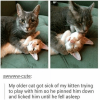 (get rekt) - Max textpost textposts: awwww-cute  My older cat got sick of my kitten trying  to play with him so he pinned him down  and licked him until he fell asleep (get rekt) - Max textpost textposts