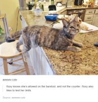 Cute, Memes, and Limited: awwww-cute  Roxy knows she's allowed on the barstool, and not the counter. Roxy also  likes to test her limits  Source: a  ute