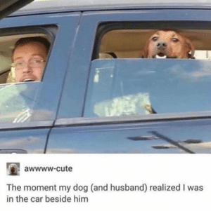 Cute, Heaven, and Husband: awwww.cute  The moment my dog (and husband) realized I was  in the car beside him This must be what you see when you reach heaven (not mine)