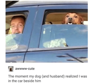 awesomacious:  awwwwwwwwwww: awwww-cute  The moment my dog (and husband) realized I was  in the car beside him awesomacious:  awwwwwwwwwww