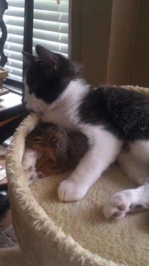 awwww-cute:  This little squirrel keeps coming in through the doggy door to hang out with my cat : awwww-cute:  This little squirrel keeps coming in through the doggy door to hang out with my cat