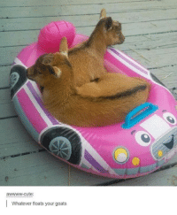 Float Your Goat: awwww-cute:  Whatever floats your goats