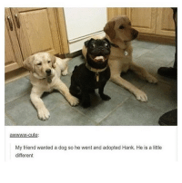 Memes, 🤖, and My Friend: awwwww-cute:  My friend wanted a dog so he went and adopted Hank. He is a little  different i love him