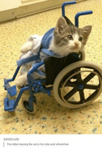cute kittens: awwwww-cute  This kitten leaving the vet in his robe and wheelchair