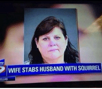 Well that escalated quickly [rLd.: ay  WIFESTABS HUSBAND WITH SQUIRREL  ELLAS Well that escalated quickly [rLd.
