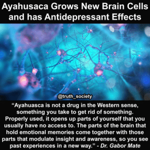 "Interest in the therapeutic potential of ayahuasca🍃 has exploded over the past few years as more and more people learn about the wonderful benefits of this sacred brew. Ayahuasca is the combination of specific plant species containing DMT and MAOIs to produce a long lasting hallucinogenic experience with profound health benefits.😊 - New research is demonstrating what indigenous South American peoples have known for thousands of years; this plant medicine drink has potent antidepressant qualities and could potentially be used to combat addiction and PTSD.🙏 - Researchers placed harmine and tetrahydroharmine – the most prevalent alkaloids in ayahuasca – in a petri dish with hippocampal stem cells, and found that this greatly increased the rate at which these cells developed into fully mature neurons. The results of this study were first presented at the Interdisciplinary Conference on Psychedelics Research, and represent the first evidence that components of ayahuasca have neurogenic properties, thereby opening up a wealth of possibilities for future research.✨ - Another more recent study has become the first to analyze the antidepressant properties of ayahuasca in a controlled setting.🔬 29 patients with severe depression were given either one session of ayahuasca or a placebo, then analyzed for changes in their depression scores.💯 - One day immediately following the sessions, the ayahuasca group scored significantly lower on depression tests compared to the placebo group. After seven days, the placebo group had returned to a normal depression level, while the ayahuasca group were still on a much lower depression score.😎 - It is important to remember that taking ayahuasca in a safe, therapeutic, and supportive environment is the greatest method for obtaining the most healing benefit possible.🙏 - This ancient brew is schedule one in the United States which means it has no medicinal value, yet is has been used as a medicine longer then the United States has existed as a country..🤔 - Source: http:-beckleyfoundation.org-ayahuasca-stimulates-the-birth-of-new-brain-cells-: Ayahusaca Grows New Brain Cells  and has Antidepressant Effects  @truth_society  ""Ayahuasca is not a drug in the Western sense,  something you take to get rid of something.  Properly used, it opens up parts of yourself that you  usually have no access to. The parts of the brain that  hold emotional memories come together with those  parts that modulate insight and awareness, so you see  past experiences in a new way."" - Dr. Gabor Mate Interest in the therapeutic potential of ayahuasca🍃 has exploded over the past few years as more and more people learn about the wonderful benefits of this sacred brew. Ayahuasca is the combination of specific plant species containing DMT and MAOIs to produce a long lasting hallucinogenic experience with profound health benefits.😊 - New research is demonstrating what indigenous South American peoples have known for thousands of years; this plant medicine drink has potent antidepressant qualities and could potentially be used to combat addiction and PTSD.🙏 - Researchers placed harmine and tetrahydroharmine – the most prevalent alkaloids in ayahuasca – in a petri dish with hippocampal stem cells, and found that this greatly increased the rate at which these cells developed into fully mature neurons. The results of this study were first presented at the Interdisciplinary Conference on Psychedelics Research, and represent the first evidence that components of ayahuasca have neurogenic properties, thereby opening up a wealth of possibilities for future research.✨ - Another more recent study has become the first to analyze the antidepressant properties of ayahuasca in a controlled setting.🔬 29 patients with severe depression were given either one session of ayahuasca or a placebo, then analyzed for changes in their depression scores.💯 - One day immediately following the sessions, the ayahuasca group scored significantly lower on depression tests compared to the placebo group. After seven days, the placebo group had returned to a normal depression level, while the ayahuasca group were still on a much lower depression score.😎 - It is important to remember that taking ayahuasca in a safe, therapeutic, and supportive environment is the greatest method for obtaining the most healing benefit possible.🙏 - This ancient brew is schedule one in the United States which means it has no medicinal value, yet is has been used as a medicine longer then the United States has existed as a country..🤔 - Source: http:-beckleyfoundation.org-ayahuasca-stimulates-the-birth-of-new-brain-cells-"