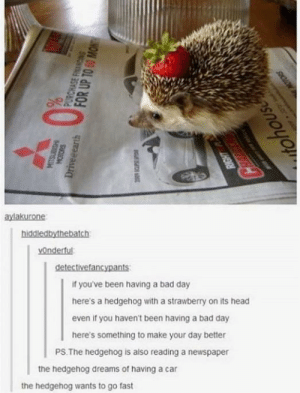 Gotta go fast: aylakurone  hiddiedbythebatch  vOndertu  detectivefancypants  if you've been having a bad day  here's a hedgehog with a strawberry on its head  even if you haven't been having a bad day  here's something to make your day better  PS The hedgehog is also reading a newspaper  the hedgehog dreams of having a car  the hedgehog wants to go fast Gotta go fast