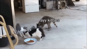 Watch this trick! via /r/funny https://ift.tt/2PVLQ5O: ayy kitties Watch this trick! via /r/funny https://ift.tt/2PVLQ5O