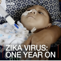 "Repost: @BBCNews- ""1 FEB: A year ago, the World Health Organization declared the Zika virus a global health emergency. The virus was linked to the birth of hundreds of babies born with underdeveloped brains in Brazil. Scientists have discovered some babies born without symptoms are developing health complications later, leading to fears that the Zika virus may be more widespread and harmful than initially thought."" 🙏 WSHH: B 2 C  ZIKA VIRUS:  ONE YEAR ON Repost: @BBCNews- ""1 FEB: A year ago, the World Health Organization declared the Zika virus a global health emergency. The virus was linked to the birth of hundreds of babies born with underdeveloped brains in Brazil. Scientists have discovered some babies born without symptoms are developing health complications later, leading to fears that the Zika virus may be more widespread and harmful than initially thought."" 🙏 WSHH"
