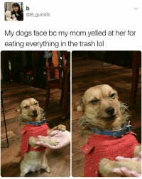 Memes, Trash, and 🤖: @B  gundis  My dogs face bc my mom yelled at her for  eating everything in the trash lol Shems not guilty | For more @aranjevi