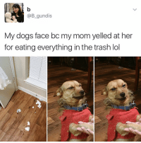 Drake, Kardashians, and Memes: @B gundis  My dogs face bc my mom yelled at her  for eating everything in the trash lol 😂😂lol - -( rp @kalesalad - - - - 420 memesdaily Relatable dank MarchMadness HoodJokes Hilarious Comedy HoodHumor ZeroChill Jokes Funny KanyeWest KimKardashian litasf KylieJenner JustinBieber Squad Crazy Omg Accurate Kardashians Epic bieber Weed TagSomeone hiphop trump rap drake