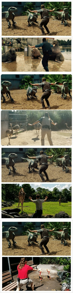 nerdistindustries:  FTW. Zookeepers and trainers around the world are recreating Chris Pratt's famous raptor pose from Jurassic World.Check out a round-up of our favorite poses on Nerdist.com!: B nerdistindustries:  FTW. Zookeepers and trainers around the world are recreating Chris Pratt's famous raptor pose from Jurassic World.Check out a round-up of our favorite poses on Nerdist.com!