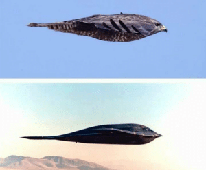 Dank, 🤖, and Falcon: B2 stealth bomber and falcon