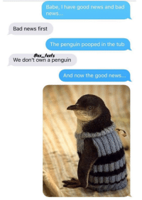 Bad, Memes, and News: Babe, I have good news and bad  news...  Bad news first  The penguin pooped in the tub  @ex fexfs  We don't own a penguin  And now the good news...