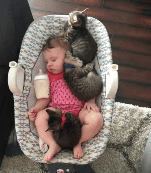 Babies and kittens, what could be better: Babies and kittens, what could be better