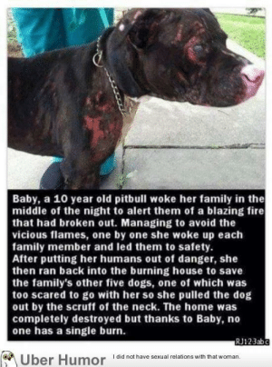 omg-pictures:  Wow that's incredible! My cat would watch us burnhttp://omg-pictures.tumblr.com: Baby, a 10 year old pitbull woke her family in the  middle of the night to alert them of a blazing fire  that had broken out. Managing to avoid the  vicious flames, one by one she woke up each  family member and led them to safety.  After putting her humans out of danger, she  then ran back into the burning house to save  the family's other five dogs, one of which was  too scared to go with her so she pulled the dog  out by the scruff of the neck. The home was  completely destroyed but thanks to Baby, no  one has a single burn.  RJ123abc  I did not have sexual relations with that woman.  Uber Humor omg-pictures:  Wow that's incredible! My cat would watch us burnhttp://omg-pictures.tumblr.com
