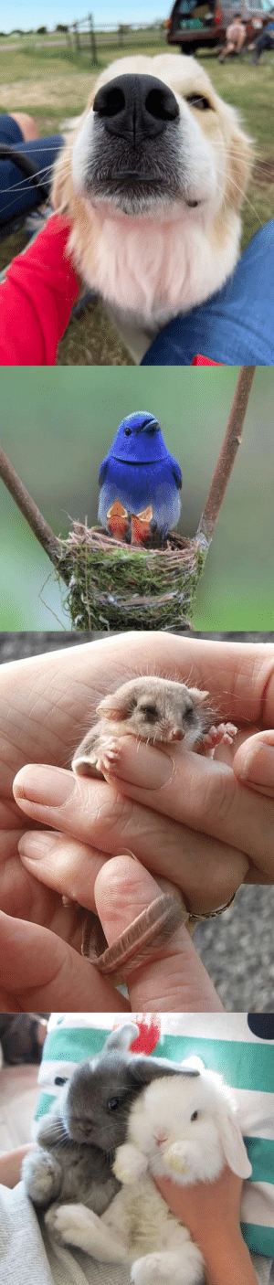 Baby animal cuteness(via): Baby animal cuteness(via)