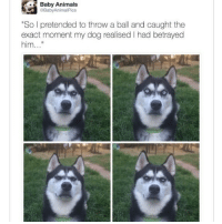 "😂Cute doggo: Baby Animals  BabyAnimalPics  ""So I pretended to throw a ball and caught the  exact moment my dog realised I had betrayed  him.. 😂Cute doggo"