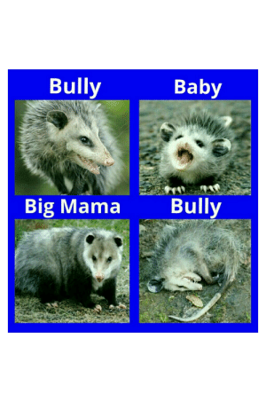 Funny, Possum, and Baby: Baby  Bully  Bully  Big Mama And that's how it's done in Possum Town.