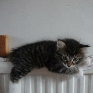 Baby Cat Wants to Know What's Going on | Baby Meme on ME.ME