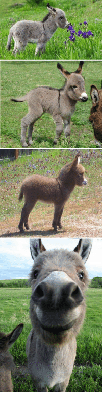 Funny, Baby, and Underrated: baby donkeys are so underrated https://t.co/u3R4w33Gcl
