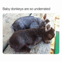 Such a cute ass: Baby donkeys are so underrated Such a cute ass