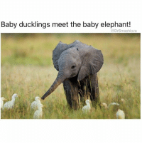 "Ass, Drunk, and Love: Baby ducklings meet the baby elephant!  @DrSmashlove Me rolling up into the party like ""oh henlo ladies hey Jen nice romper Kelly I see you got some new ink on your wrist that's sexy oh hai Megan that ass looking incredible oh wow Erin is drunk already cot damn she messy I love it tho 😍"" TagYourHomegirlWhoAlwaysMessyAF SheDaRealMVP 🥇 😂😂😂"