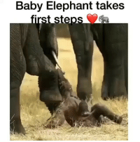 Beautiful, Memes, and Music: Baby Elephant takes  st steps Rp @mediablackoutusa Rp @mediablackoutusa This would be so beautiful to witness. ❤️🐘. Music is Go And See The World by @DonnyArcade ft @superdalu Coming Soon!!! 4biddenknowledge