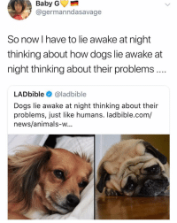 Animals, Dogs, and Memes: Baby  @germanndasavage  So now I have to lie awake at night  thinking about how dogs lie awake at  night thinking about their problems.  LADbible@ladbible  Dogs lie awake at night thinking about their  problems, just like humans. ladbible.com/  news/animals-w... sad and uncool