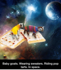 Memes, Pop, and Space: Baby goats. Wearing sweaters. Riding pop  tarts. In space.