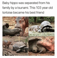 Best Friend, Family, and Friends: Baby hippo was separated from his  family by a tsunami. This 103 year old  tortoise became his best friend Best friends goals (@hilarious.ted)