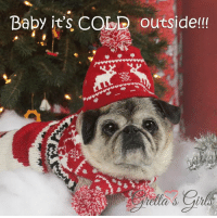 Chill, Memes, and Zero: Baby it's CabD outside!!! It is FREEZING here in the northeast!!! Temps dropping below zero tonight :( Tomorrow a wind chill of -20 :( YIKES!!! I am so blessed to have a warm, safe, loving place to call home thanks to Central Coast Pug Rescue. Not all pugs are that lucky :(  With your help, we can help rescues everywhere to make sure no pug goes without a place to call home <3 <3 <3   TODAY we celebrate and thank Pug Pals, Greater Boise Pug Rescue and Placement, Inc for all the wonderful and selfless work they do for pugs every day. We are donating 100% of CALENDAR PROFITS today and tomorrow. Get yours >> http://www.grettasgirls.com <<  PUG PALS gets $8.00 from every calendar to help pugs in need!!! How cool is that?!!?   Together we can help save SO many pugs and help PUG PALS give them the love they deserve!!  Pug love and thanks to all, Maddie Kathryn and the entire Pugs and Kisses family PS You GIVE and you GET a darn cute calendar too!!! <3