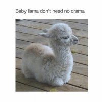 Baby, It's Cold Outside, Bitch, and Girl Memes: Baby llama don't need no drama bye bitches have a great day