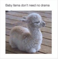 "If you like this - please ""like"" our page http://www.facebook.com/WhatYouToo: Baby llama don't need no drama If you like this - please ""like"" our page http://www.facebook.com/WhatYouToo"