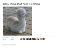 Funny Llama Pictures: Baby llama don't need no drama  RETWEETS LIKES  521  852  Source: awwdorables
