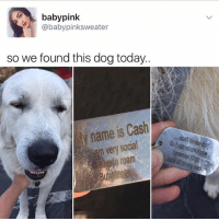 😍😍 Cute doggo: baby pink  @baby pink sweater  so we found this dog today..  ly name is Cash  gocal  am very  roam 😍😍 Cute doggo