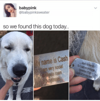 """""""I follow @kalesalad and you should too"""" - Kendall Jenner And Jesus: baby pink  @baby pinksweater  so we found this dog today..  name Cash  is m social  very Solcan return home """"I follow @kalesalad and you should too"""" - Kendall Jenner And Jesus"""