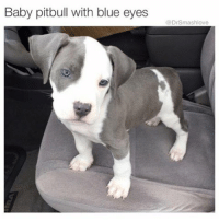 Chill, Crackhead, and Memes: Baby pitbull with blue eyes  DrSmashlove How I look at my girl when she extremely trippin, talkin reckless, being exkra like it's her job and pushing 100% of my buttons but I know that the Punani absolutely A1 and I'm addicted like a crackhead so imma take all the abuse like a good boy and then pipe her down until she chill again 🤗😂😂😂