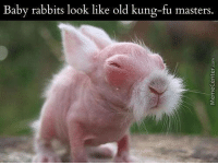 Patience, young one.: Baby rabbits look like old kung-fu masters. Patience, young one.