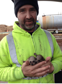 Trash, Work, and Today: Baby trash pandas I rescued at work today